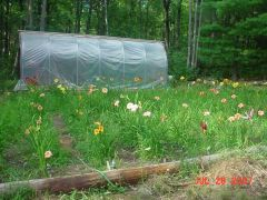 small greenhouse that I made and some of my daylilies