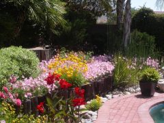 Our Yard in Full Bloom