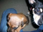gypsy and daughter mya 2009, my other fur babies