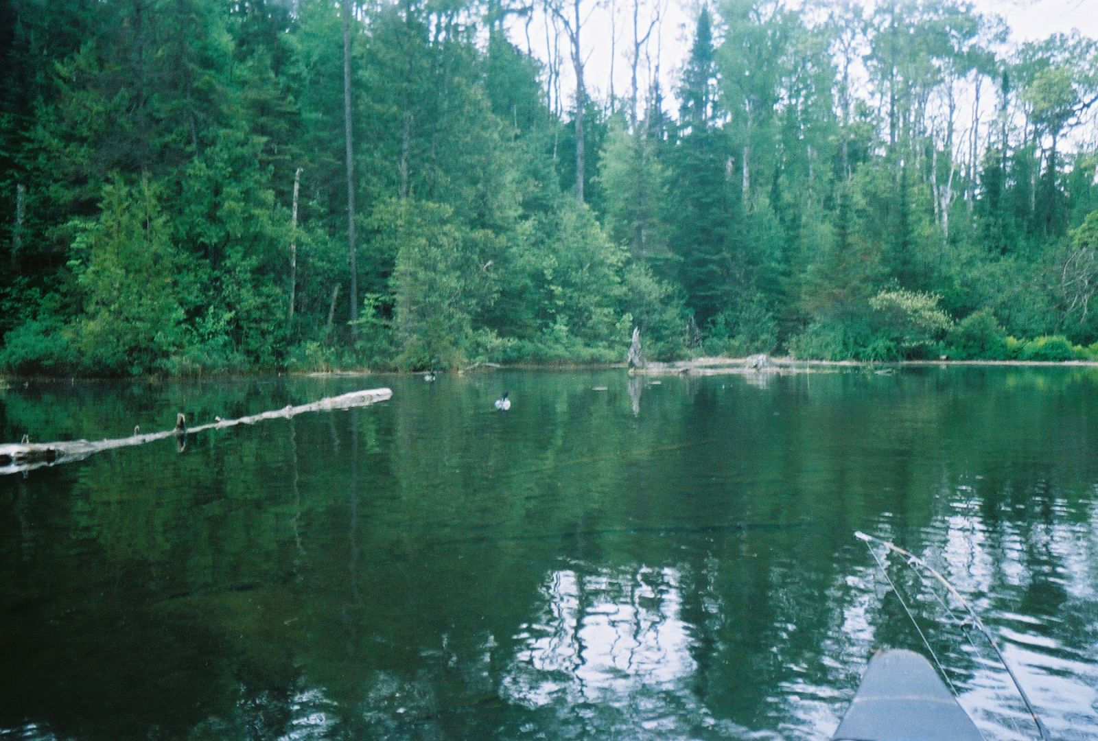 Fishing Spot On Canoe lake