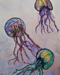 Jellyfish Splendor