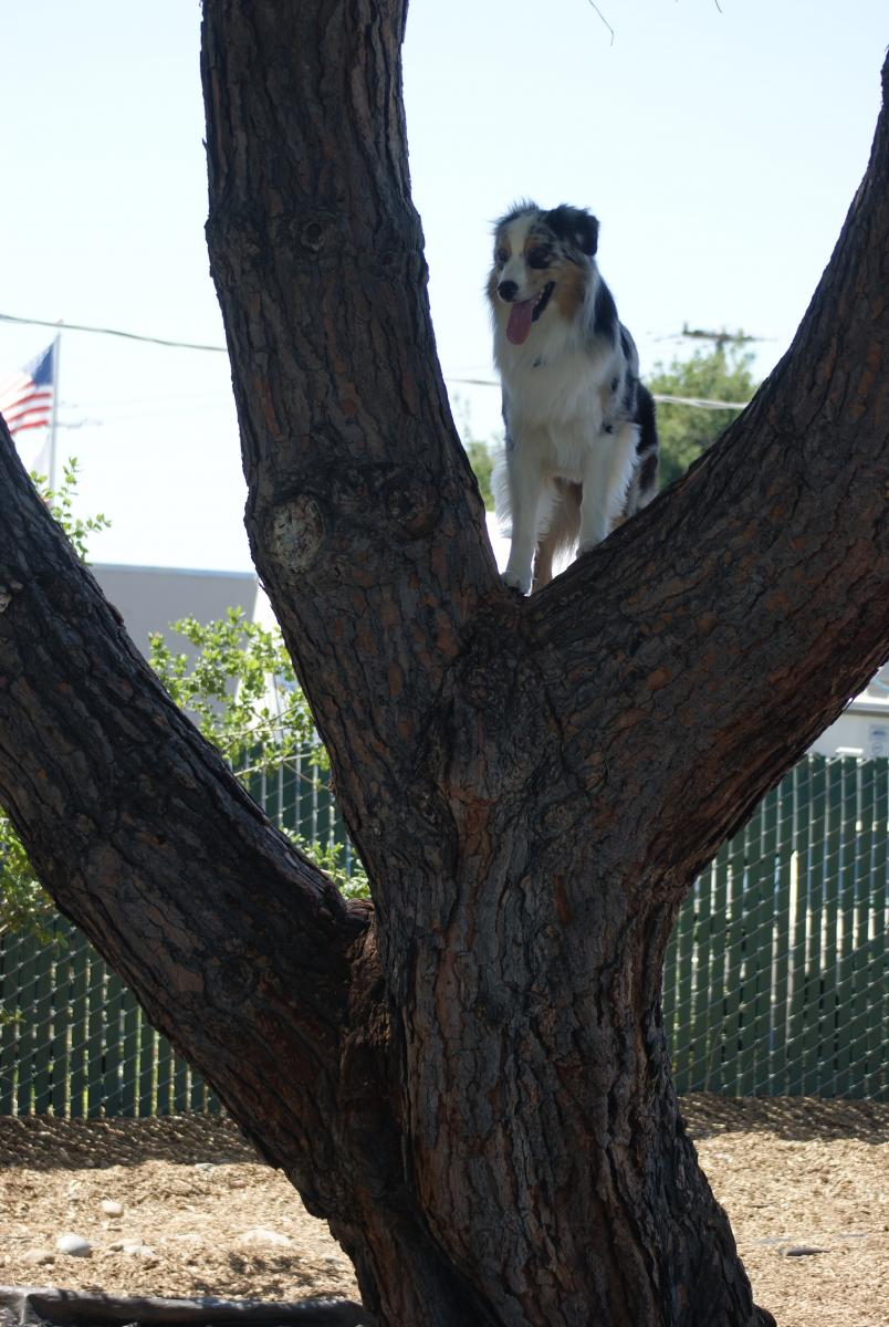 Daeo Climbs Trees! 6/9/2011. (This tree was about 8ft up)