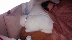 Kitty sleeping with me after the stroke